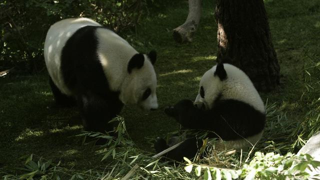 20101201-20101130__D0H2140_pandas.JPG